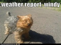 windy.jpeg