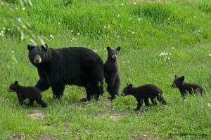 bearmamma4-cubsjune-8-2014d200dsc_0055-300x200