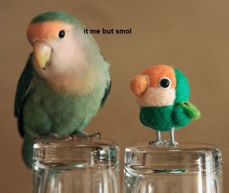 "Two birds (one real, one made out of felt, smaller with the same coloring).  Text overlay that says ""it me but smol"""